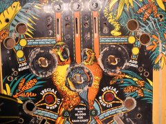 playfield-amazon-hunt03.JPG